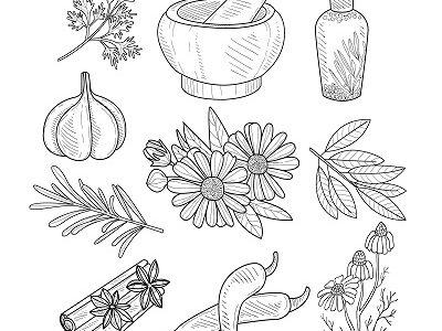 """Groupe """"plantes médicinales"""""""