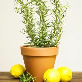 Sirop romarin et citron